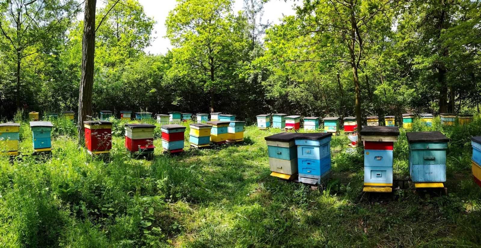 Świat pszczół w liczbach
